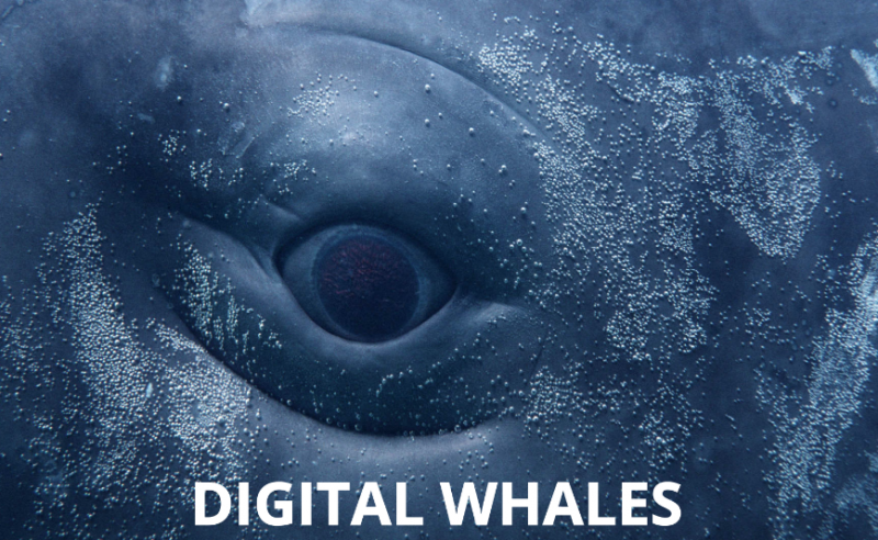 Digital Whales: arrivano le balene a Milano